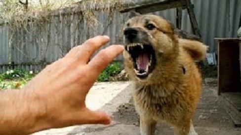 Шокер защитит от агрессивного хулигана, злой собаки
